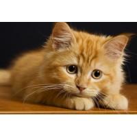 10 самых опасных продуктов для котов!