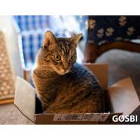 Вашего кота не вытащить из коробки?
