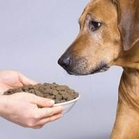 Основы правильного питания для собак